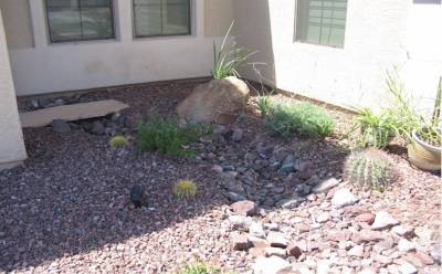 desert landscape river bed low maintenance yard
