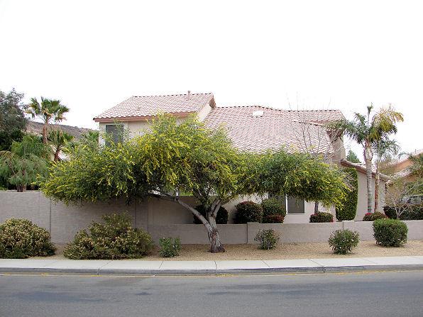 Arizona Trees Arizona Living Landscape Design