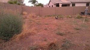 backyard-before-landscape-arizona-living-landscape