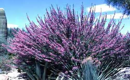 Arizona Desert Plants Guide