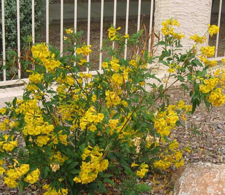Arizona Desert Plants Guide