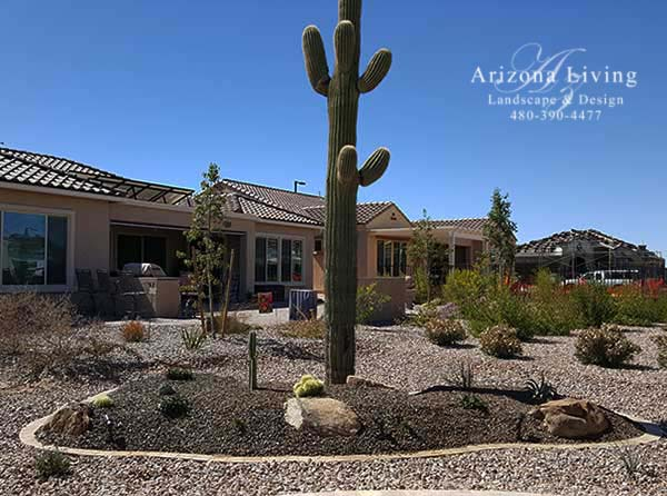 desert landscape ideas with saguaro cactus